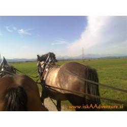 Konjska vprega - Ljubljansko barje